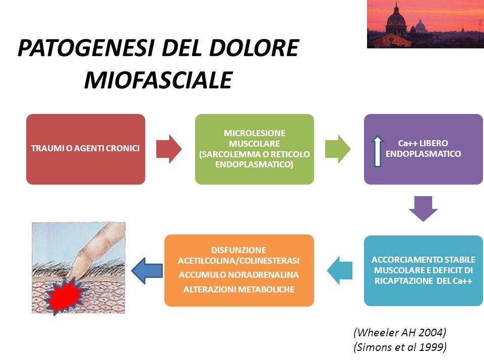 PATOGENESI DEL DOLORE MIOFASCIALE TRAUMI O AGENTI CRONICI MICROLESIONE MUSCOLARE (SARCOLEMMA O RETICOLO ENDOPLASMATICO) Ca++ LIBERO ENDOPLASMATICO ACC