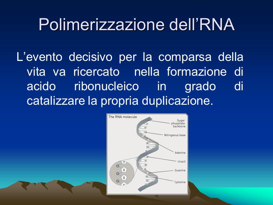 Polimerizzazione dellRNA Levento decisivo per la comparsa della vita va ricercato nella formazione di acido ribonucleico in grado di catalizzare la pr