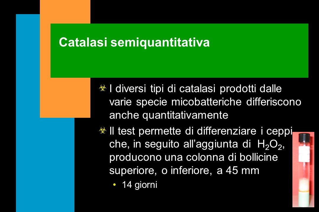 Catalasi a 68°C Praticamente tutti i micobatteri producono catalasi In quasi tutte le specie, ad eccezione di quelle del M. tuberculosis complex la ca