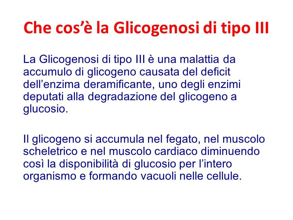 Che cosè la Glicogenosi di tipo III La Glicogenosi di tipo III è una malattia da accumulo di glicogeno causata del deficit dellenzima deramificante, uno degli enzimi deputati alla degradazione del glicogeno a glucosio.