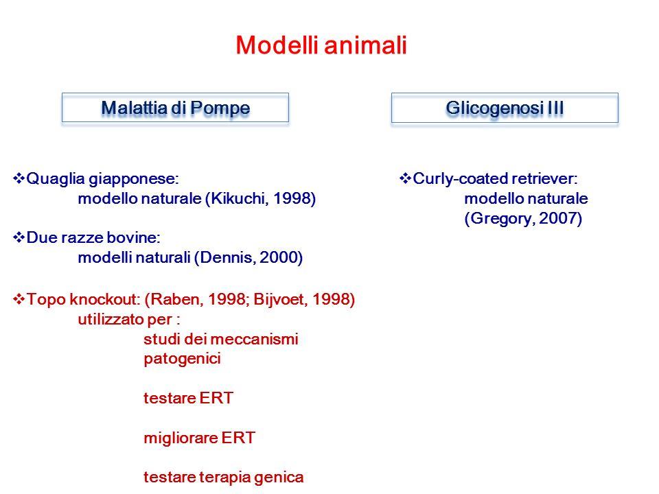 Modelli animali Malattia di Pompe Glicogenosi III Quaglia giapponese: modello naturale (Kikuchi, 1998) Due razze bovine: modelli naturali (Dennis, 2000) Topo knockout: (Raben, 1998; Bijvoet, 1998) utilizzato per : studi dei meccanismi patogenici testare ERT migliorare ERT testare terapia genica Curly-coated retriever: modello naturale (Gregory, 2007)
