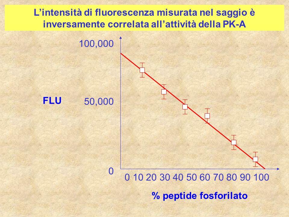 % peptide fosforilato 0 10 20 30 40 50 60 70 80 90 100 FLU 100,000 50,000 0 Lintensità di fluorescenza misurata nel saggio è inversamente correlata al