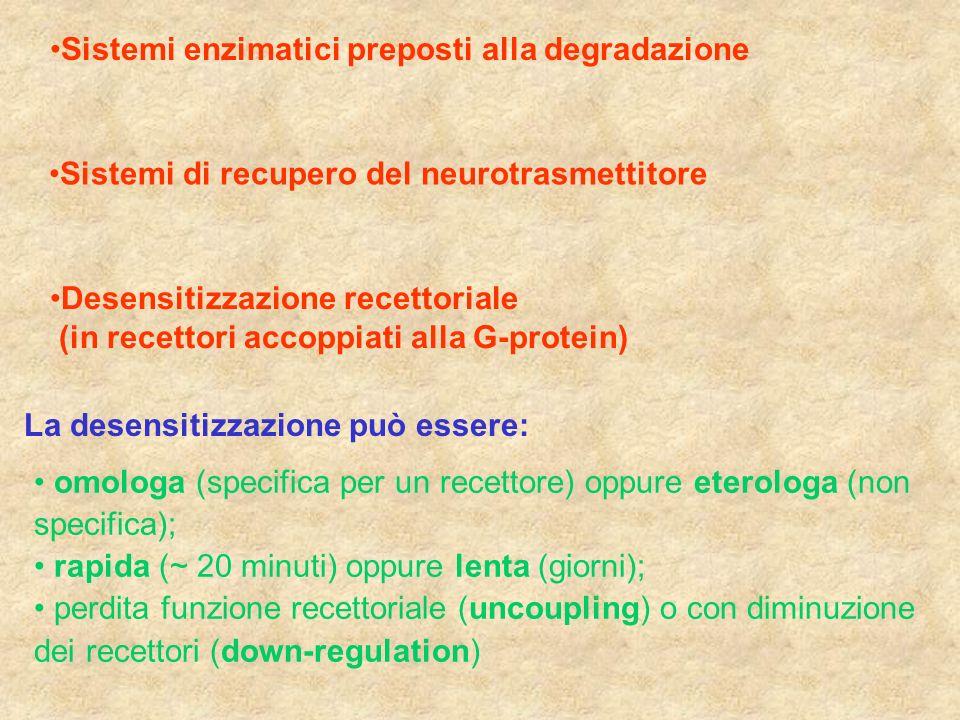 Sistemi enzimatici preposti alla degradazione Sistemi di recupero del neurotrasmettitore Desensitizzazione recettoriale (in recettori accoppiati alla