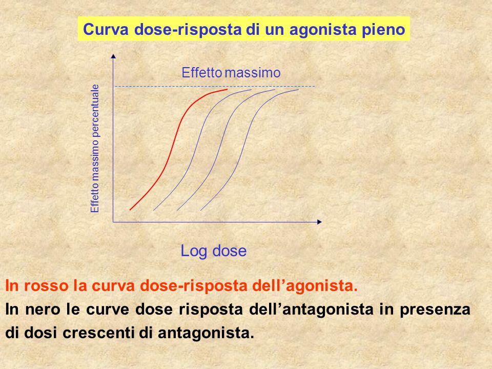 Curva dose-risposta di un agonista pieno Effetto massimo percentuale Log dose Effetto massimo In rosso la curva dose-risposta dellagonista. In nero le