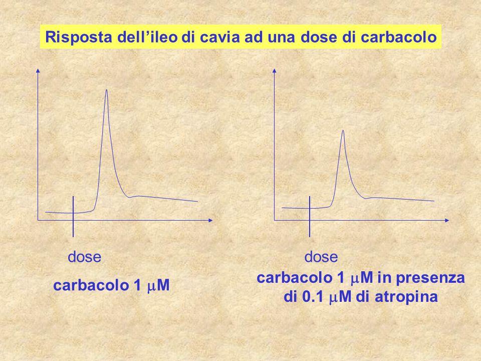 dose carbacolo 1 M carbacolo 1 M in presenza di 0.1 M di atropina Risposta dellileo di cavia ad una dose di carbacolo