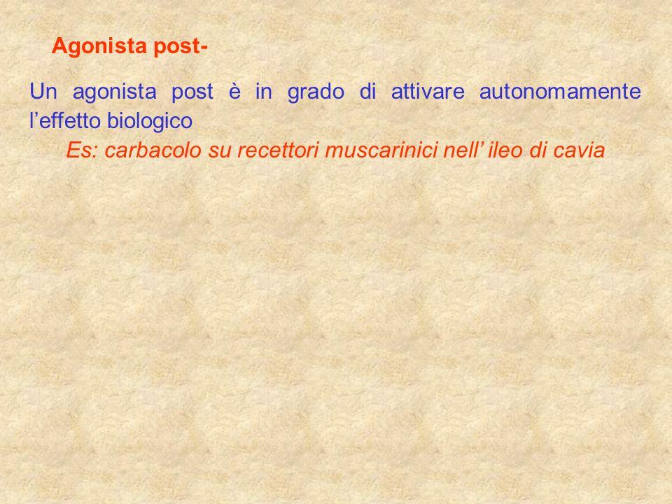 Agonista post- Un agonista post è in grado di attivare autonomamente leffetto biologico Es: carbacolo su recettori muscarinici nell ileo di cavia