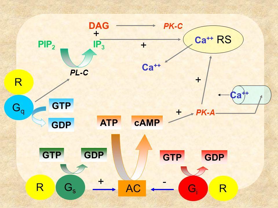 Sfruttando il meccanismo di attivazione illustrato si può determinare lattività agonista, agonista inverso, agonista parziale, antagonista.