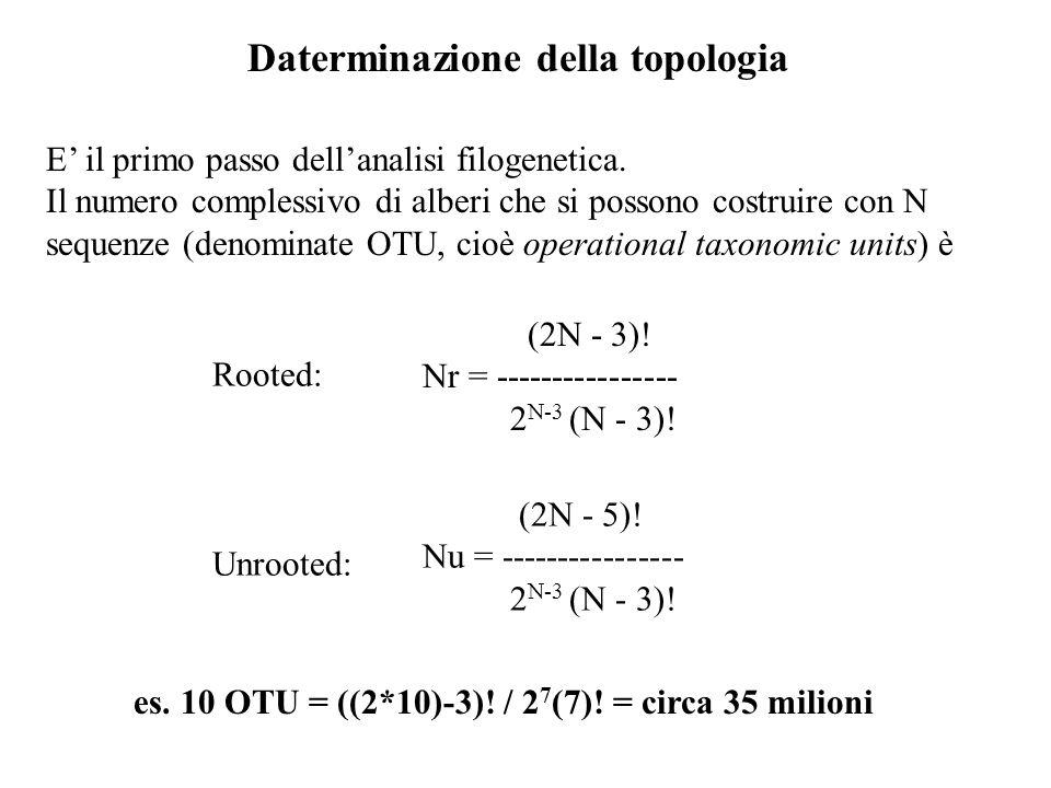 Daterminazione della topologia E il primo passo dellanalisi filogenetica. Il numero complessivo di alberi che si possono costruire con N sequenze (den