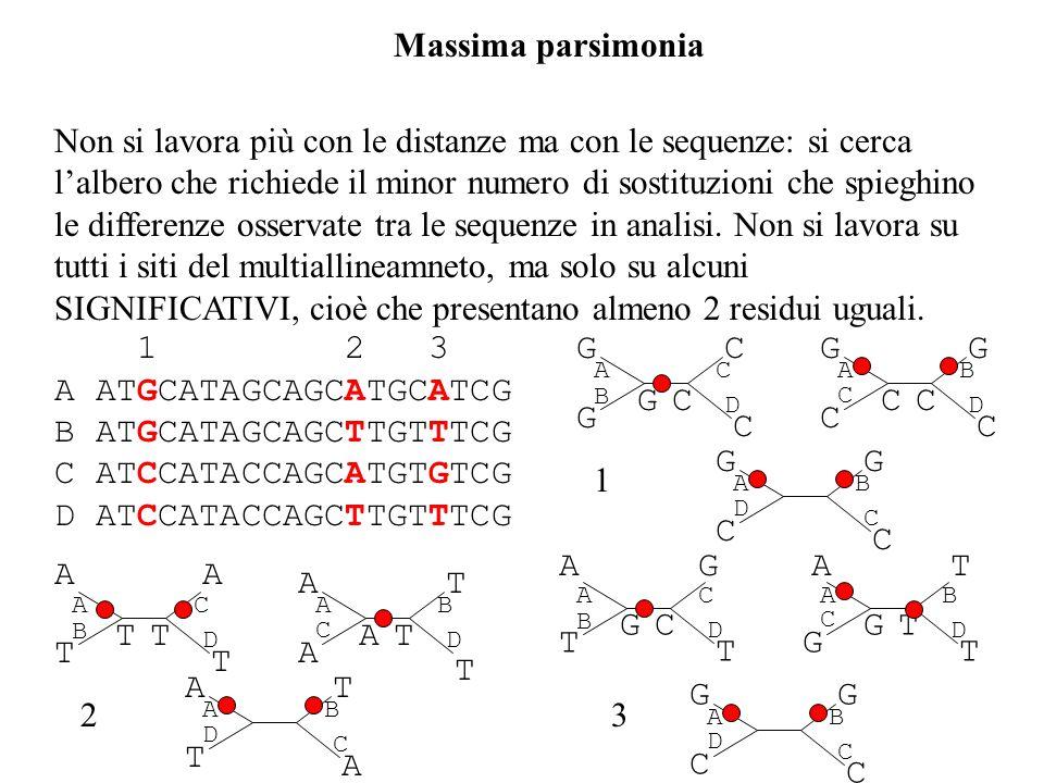 Massima parsimonia Non si lavora più con le distanze ma con le sequenze: si cerca lalbero che richiede il minor numero di sostituzioni che spieghino l