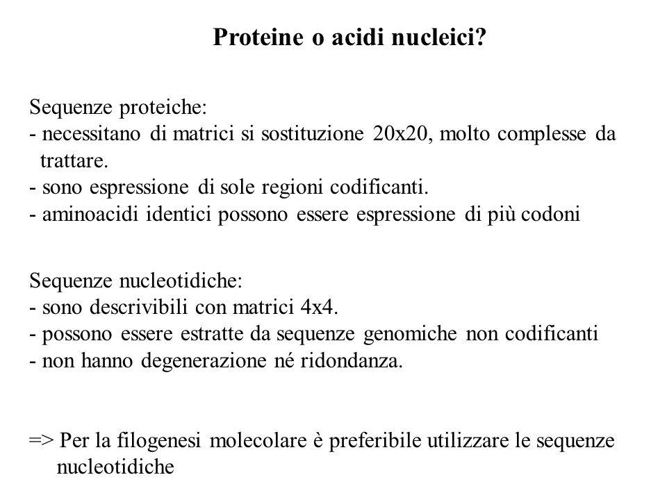 Proteine o acidi nucleici? Sequenze proteiche: - necessitano di matrici si sostituzione 20x20, molto complesse da trattare. - sono espressione di sole