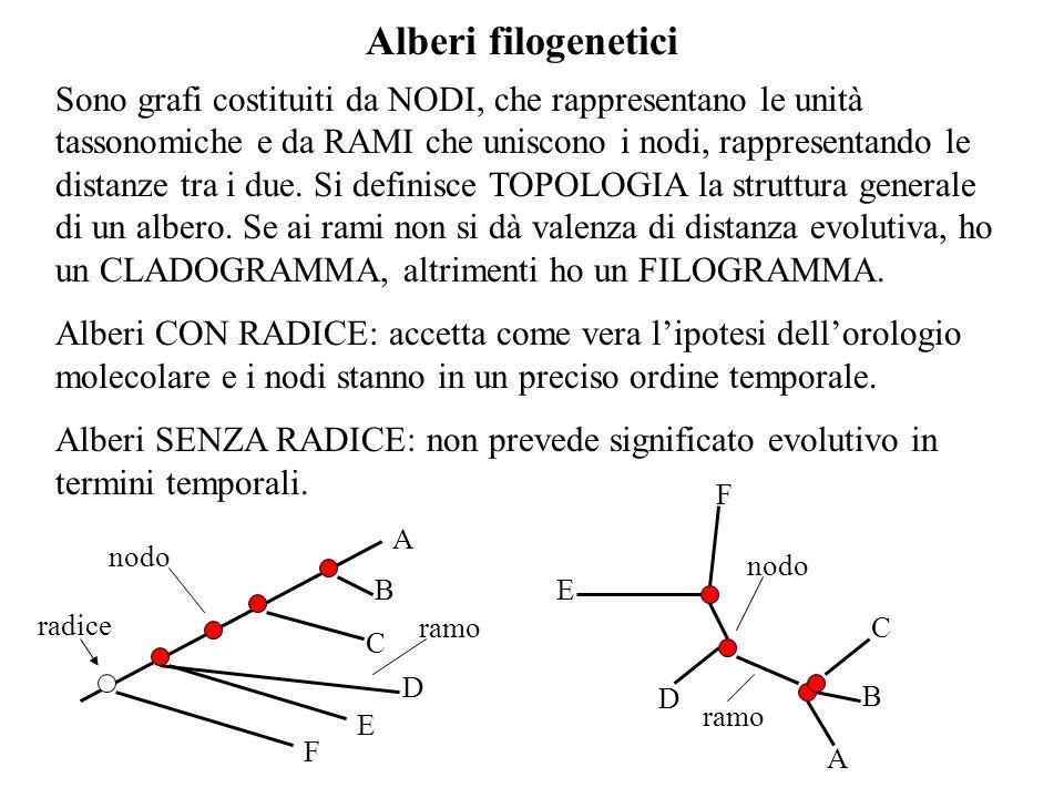 Alberi filogenetici Sono grafi costituiti da NODI, che rappresentano le unità tassonomiche e da RAMI che uniscono i nodi, rappresentando le distanze t