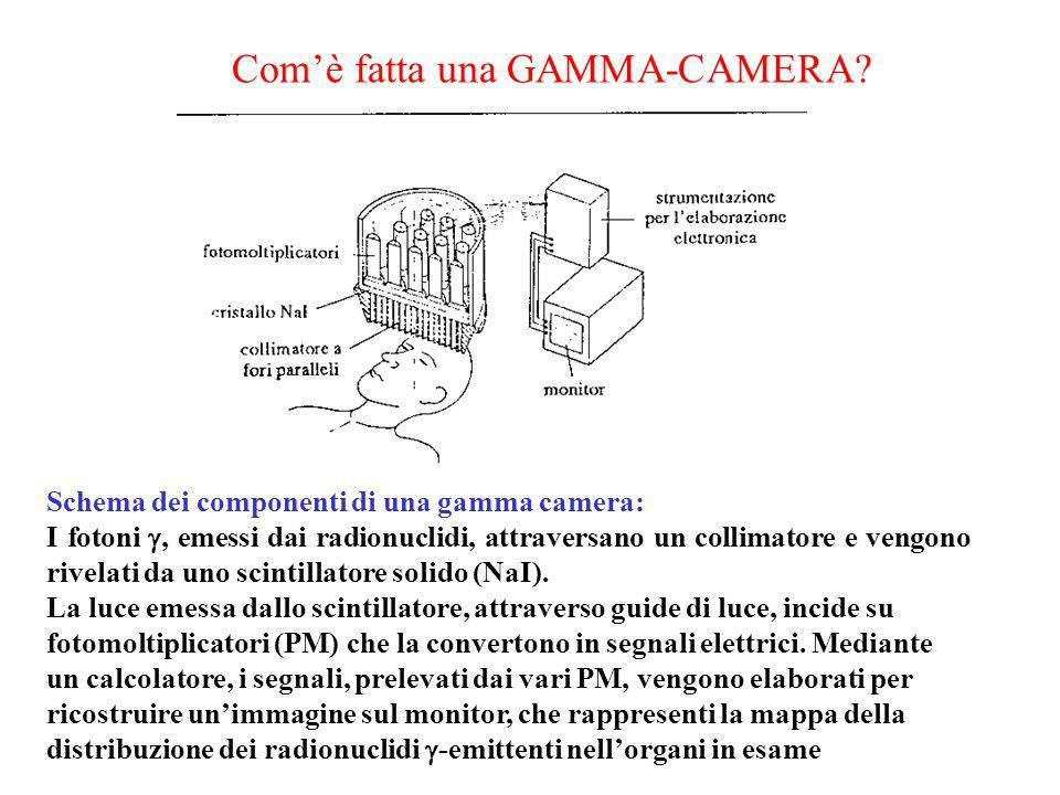 Comè fatta una GAMMA-CAMERA? Schema dei componenti di una gamma camera: I fotoni, emessi dai radionuclidi, attraversano un collimatore e vengono rivel