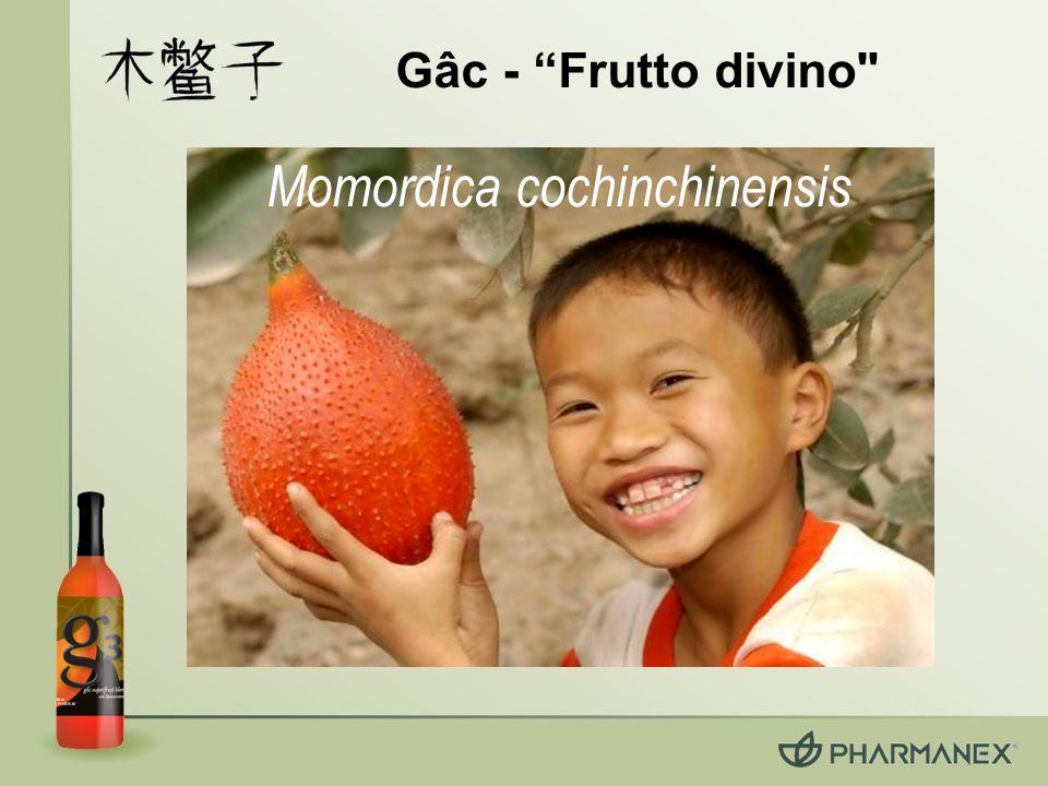 Un articolo scientifico con valutazione peer-review Current Topics in Nutraceutical Research, novembre 2005 esamina i benefici dei super frutti utilizzati in g3