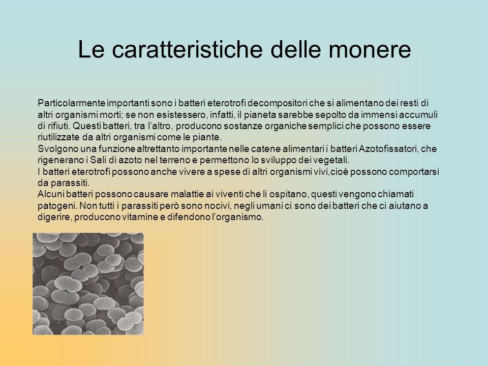 Le caratteristiche delle monere Particolarmente importanti sono i batteri eterotrofi decompositori che si alimentano dei resti di altri organismi mort