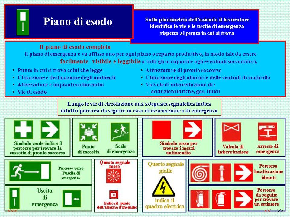 Piano di esodo Sulla planimetria dellazienda il lavoratore identifica le vie e le uscite di emergenza rispetto al punto in cui si trova Lungo le vie d