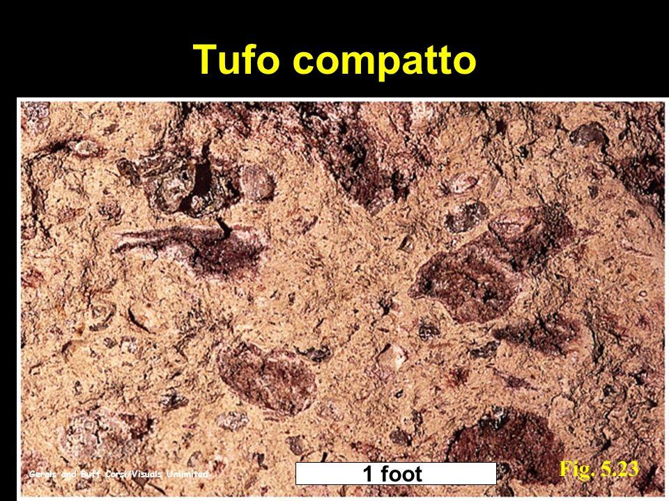 Tufo compatto Gerals and Buff Corsi/Visuals Unlimited Fig. 5.23 1 foot