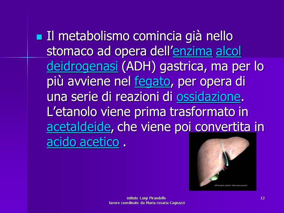 istituto Luigi Pirandello lavoro coordinato da Maria rosaria Cagnazzi 12 Il metabolismo comincia già nello stomaco ad opera dellenzima alcol deidrogen