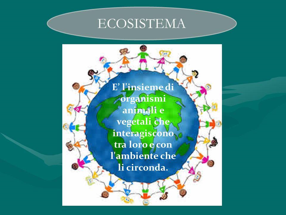ECOSISTEMA E l'insieme di organismi animali e vegetali che interagiscono tra loro e con l'ambiente che li circonda.