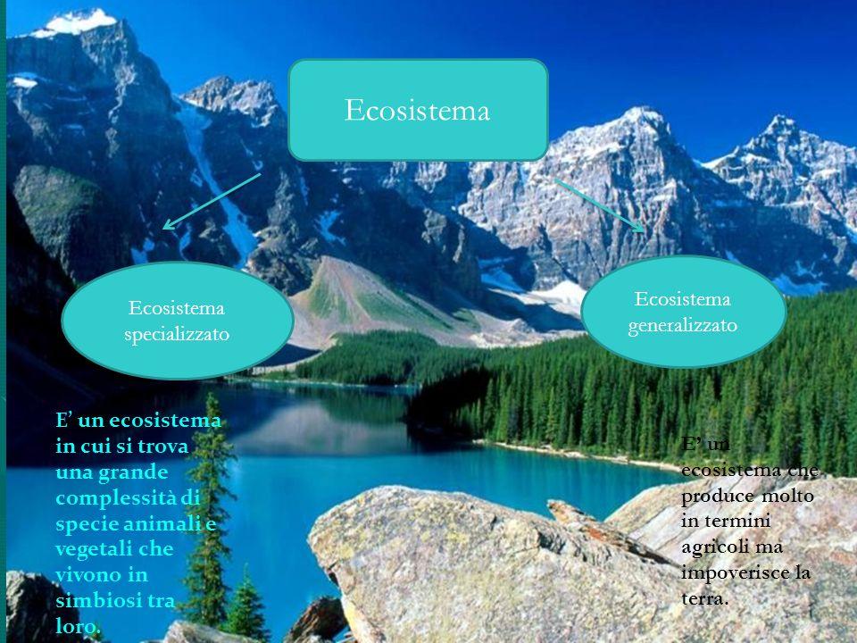 Ecosistema Ecosistema specializzato Ecosistema generalizzato E un ecosistema in cui si trova una grande complessità di specie animali e vegetali che v