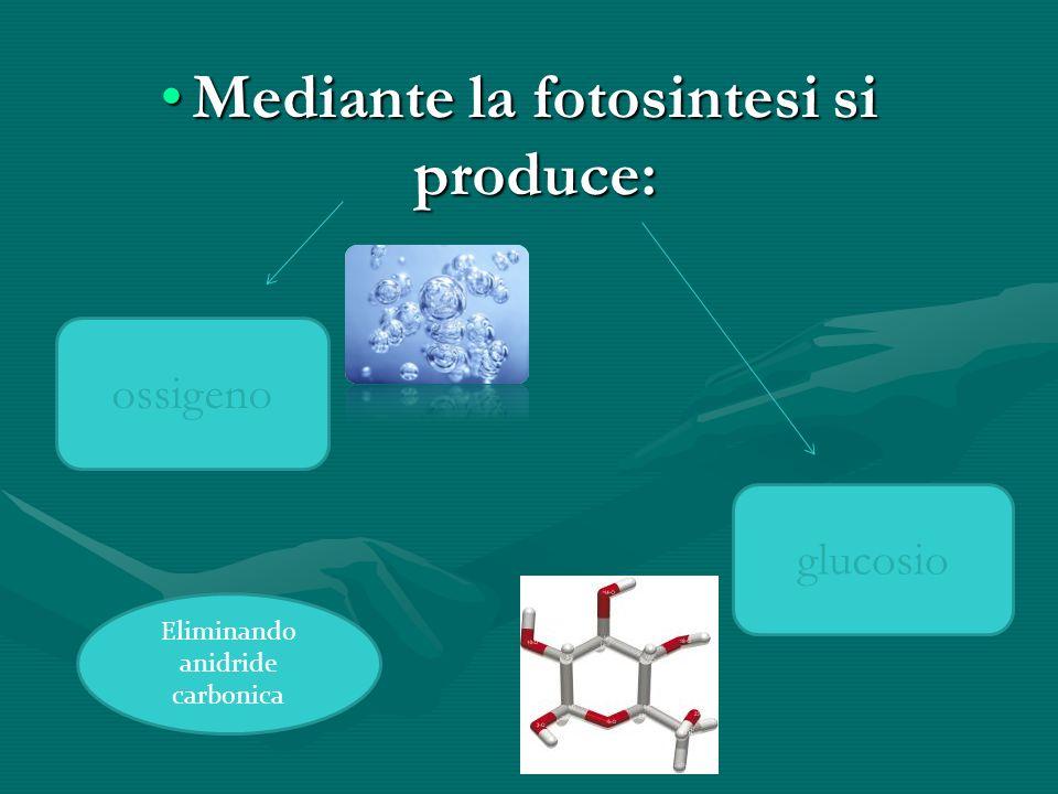 Mediante la fotosintesi si produce:Mediante la fotosintesi si produce: glucosio ossigeno Eliminando anidride carbonica