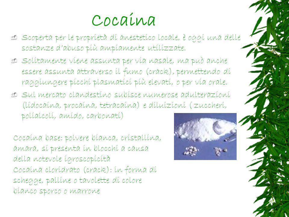 Cocaina Scoperta per le proprietà di anestetico locale, è oggi una delle sostanze dabuso più ampiamente utilizzate.