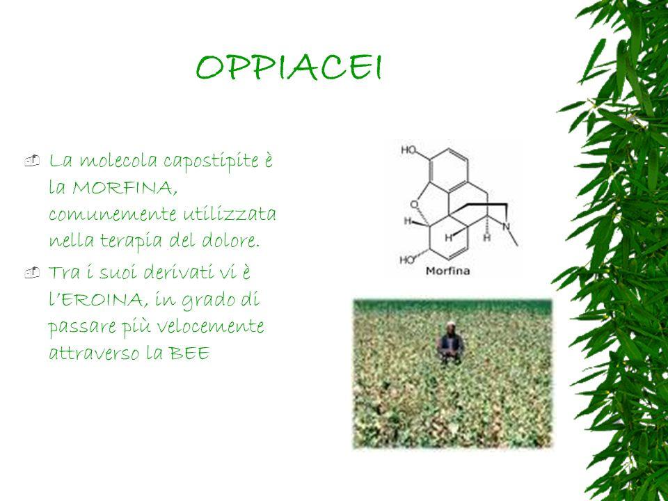 OPPIACEI La molecola capostipite è la MORFINA, comunemente utilizzata nella terapia del dolore.
