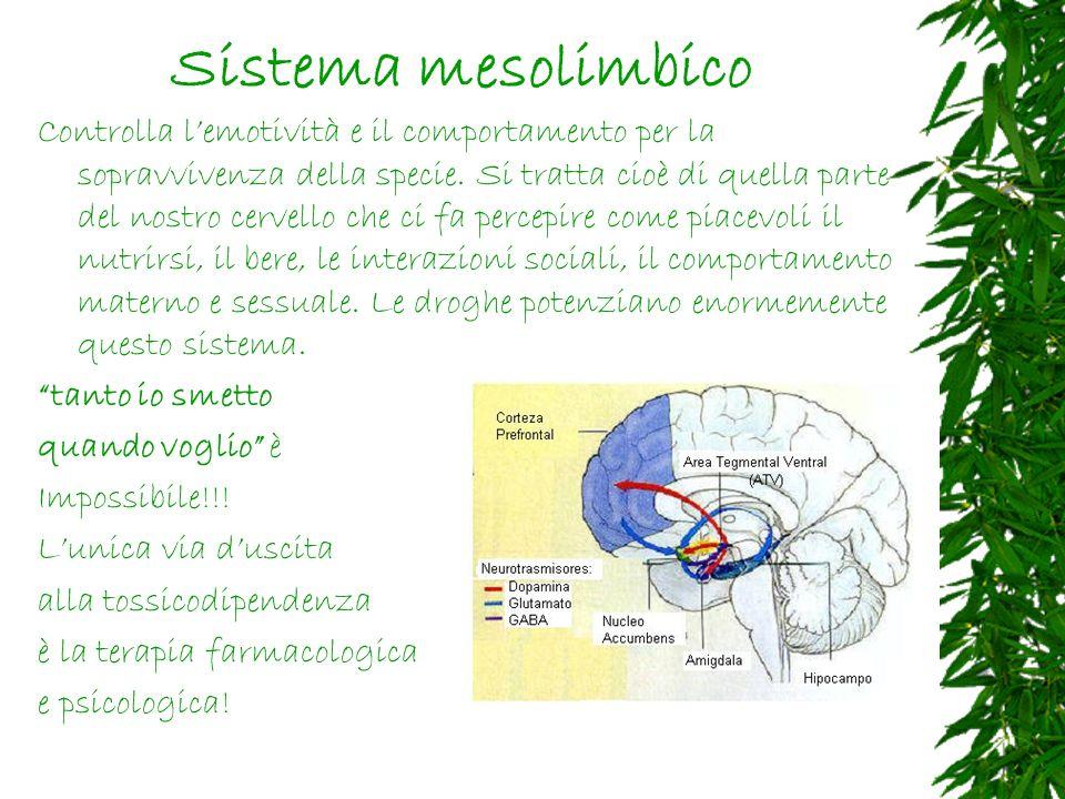 Sistema mesolimbico Controlla lemotività e il comportamento per la sopravvivenza della specie.