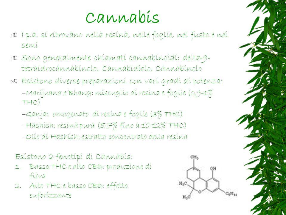 Cannabis I p.a.