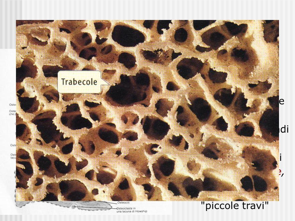 Tessuto osseo spugnoso le lamelle sono disposte in modo irregolare a formare una rete a tre dimensioni con grandi cavità interne. Le maglie della rete