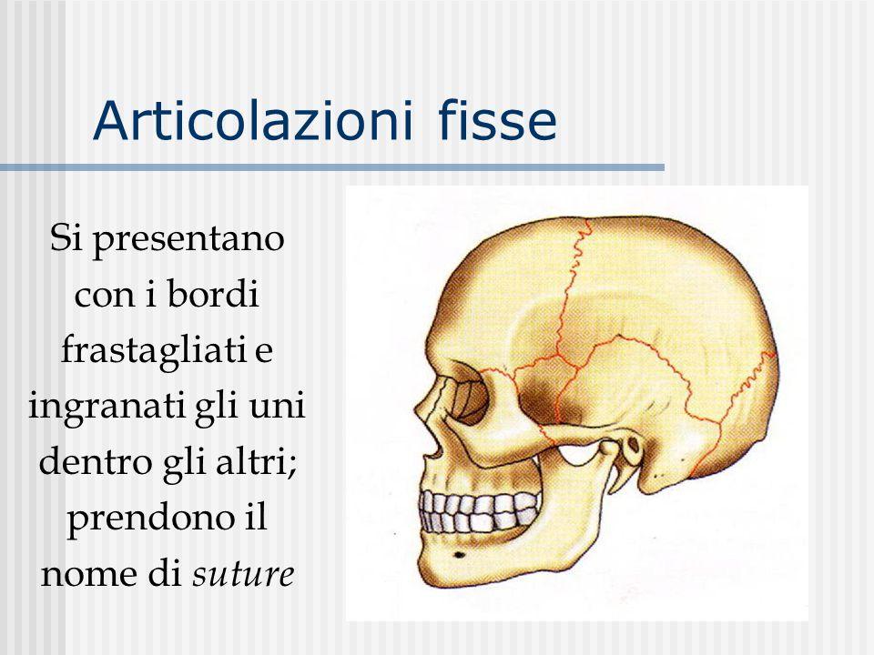 Articolazioni fisse Si presentano con i bordi frastagliati e ingranati gli uni dentro gli altri; prendono il nome di suture