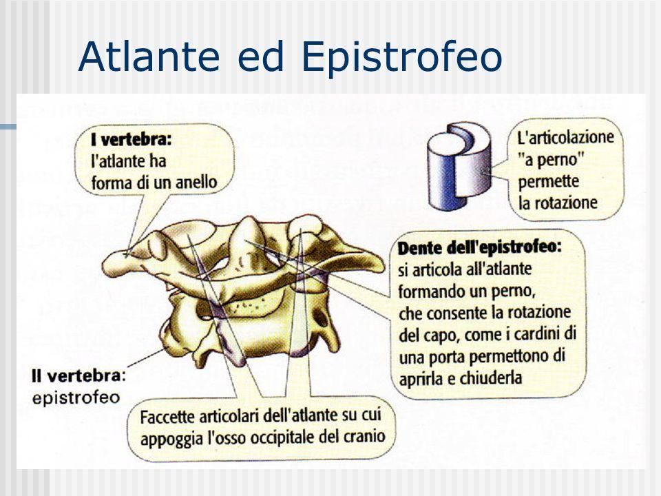 Atlante ed Epistrofeo