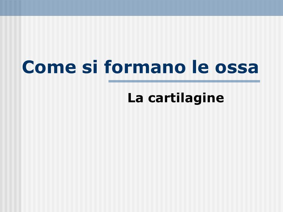 Come si formano le ossa La cartilagine