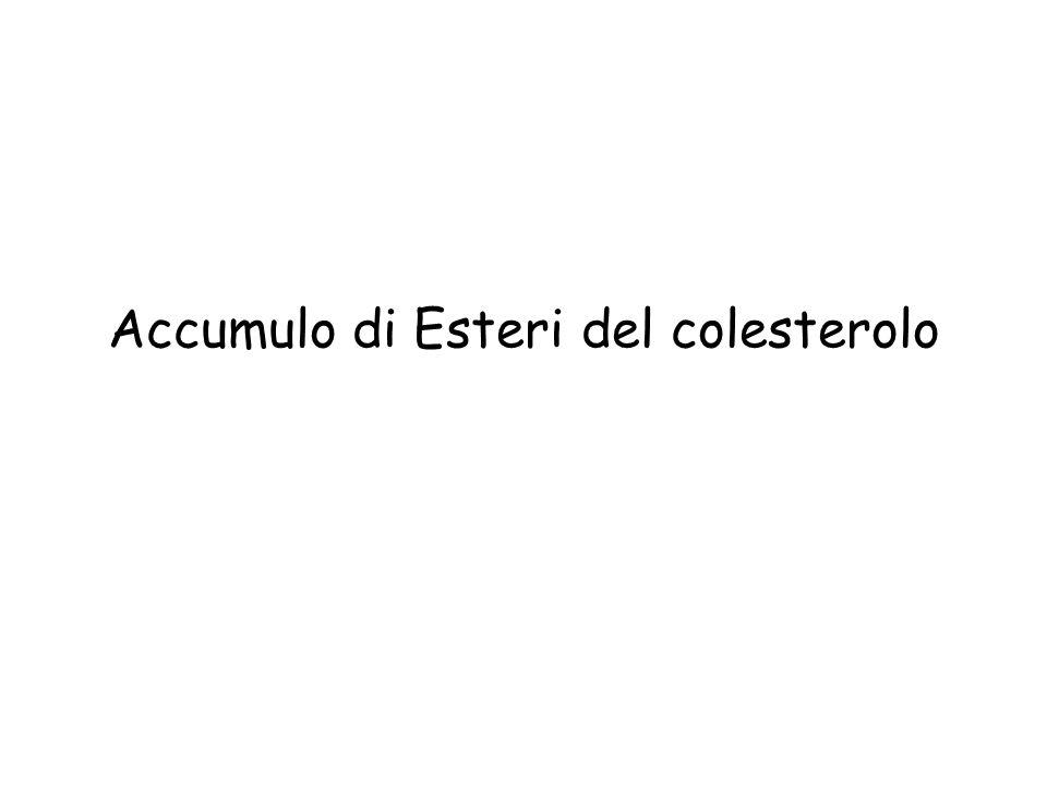 Melanine Eumelanina polimero insolubile della tirosina: Cute Epitelio pigmentato dellocchio Meningi (dove si possono sviluppare dei melanomi) Nuclei del tronco cerebrale (substantia nigra e locus coeruleus) Sistema cromaffine (midollare del surrene, ganli simpatici) Neuromelanina corpi residui dei neuroni Feomelanina polimero solubile di tirosina e cisteina Pigmento tipico dei capelli rossi