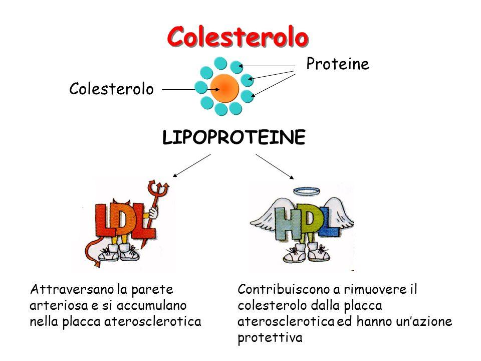 LIPOPROTEINE Attraversano la parete arteriosa e si accumulano nella placca aterosclerotica Contribuiscono a rimuovere il colesterolo dalla placca aterosclerotica ed hanno unazione protettiva Colesterolo Proteine Colesterolo
