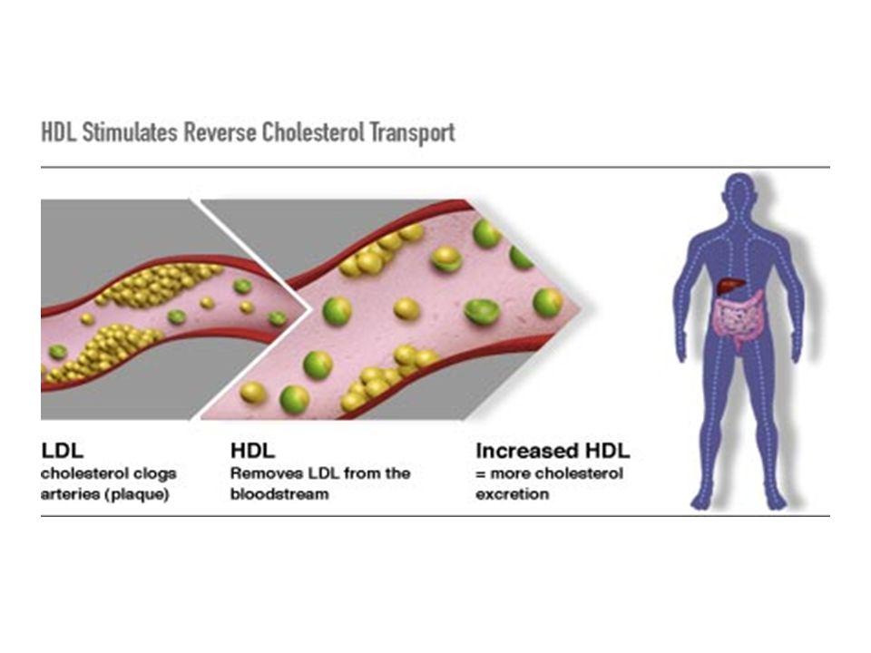 Il Colesterolo è trasportato alle pareti arteriose dalle LDL e dalle pareti arteriose ritorna al fegato trasportato dalle HDL.