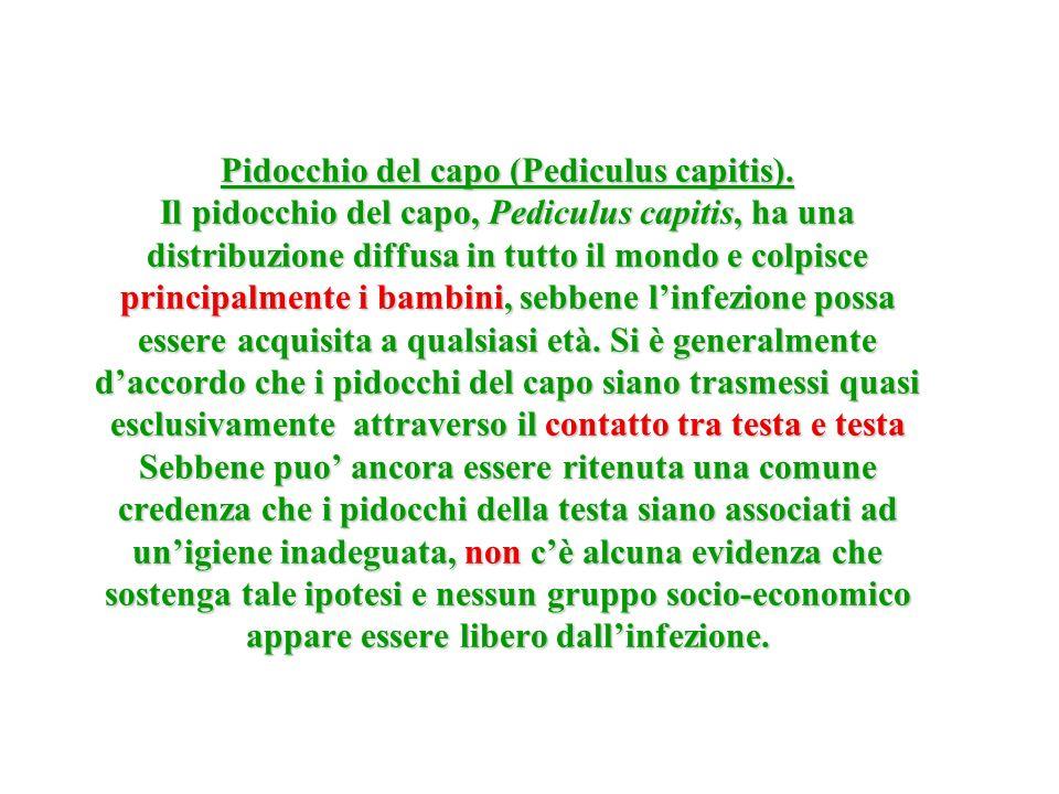 Pidocchio del capo (Pediculus capitis). Il pidocchio del capo, Pediculus capitis, ha una distribuzione diffusa in tutto il mondo e colpisce principalm