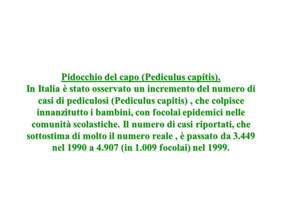 Pidocchio del capo (Pediculus capitis). In Italia è stato osservato un incremento del numero di casi di pediculosi (Pediculus capitis), che colpisce i