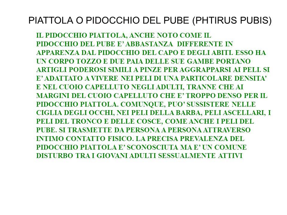 PIATTOLA O PIDOCCHIO DEL PUBE (PHTIRUS PUBIS) IL PIDOCCHIO PIATTOLA, ANCHE NOTO COME IL PIDOCCHIO DEL PUBE E ABBASTANZA DIFFERENTE IN APPARENZA DAL PI