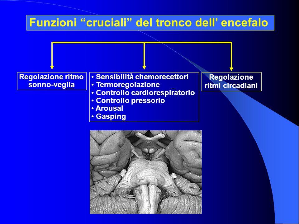 Regolazione ritmo sonno-veglia Sensibilità chemorecettori Termoregolazione Controllo cardiorespiratorio Controllo pressorio Arousal Gasping Regolazion