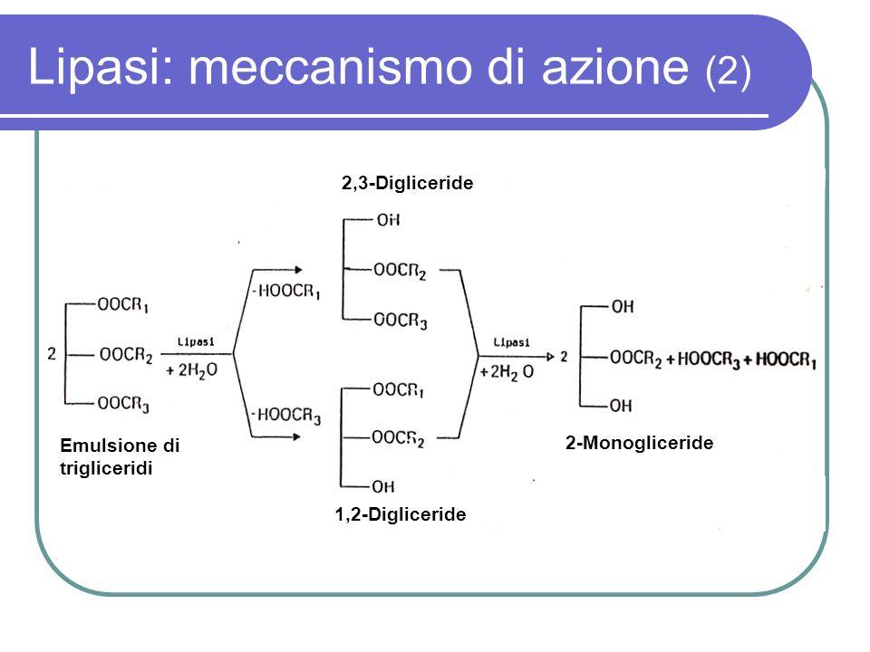 Lipasi: meccanismo di azione (2) 2,3-Digliceride 1,2-Digliceride 2-Monogliceride Emulsione di trigliceridi