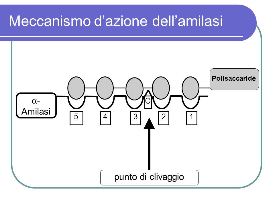 Meccanismo dazione dellamilasi 54321 C - Amilasi punto di clivaggio Polisaccaride
