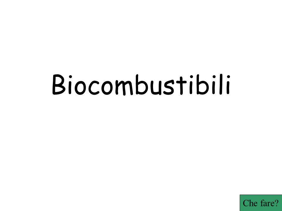 Biocombustibili Che fare?