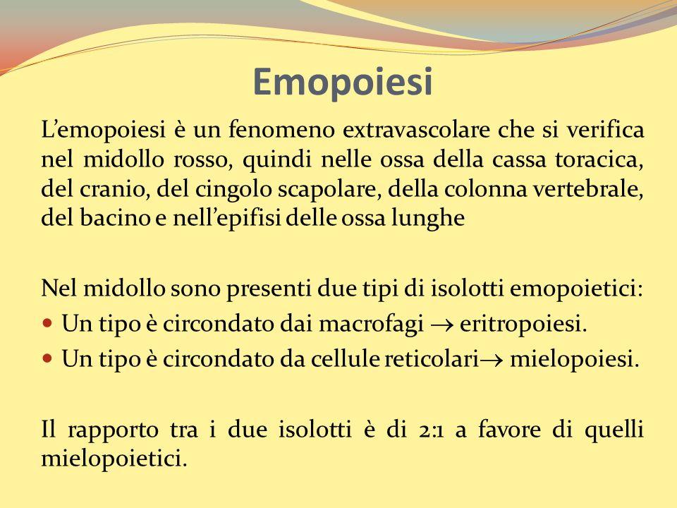 Emopoiesi Lemopoiesi è un fenomeno extravascolare che si verifica nel midollo rosso, quindi nelle ossa della cassa toracica, del cranio, del cingolo scapolare, della colonna vertebrale, del bacino e nellepifisi delle ossa lunghe Nel midollo sono presenti due tipi di isolotti emopoietici: Un tipo è circondato dai macrofagi eritropoiesi.