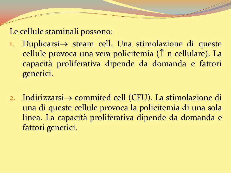 Le cellule staminali possono: 1.Duplicarsi steam cell.