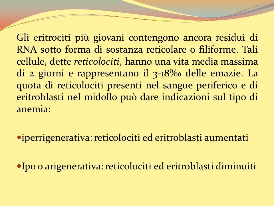 Gli eritrociti più giovani contengono ancora residui di RNA sotto forma di sostanza reticolare o filiforme.