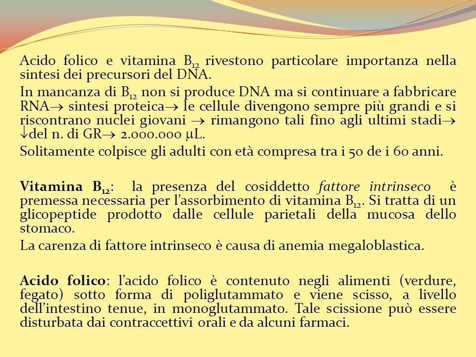 Acido folico e vitamina B 12 rivestono particolare importanza nella sintesi dei precursori del DNA.