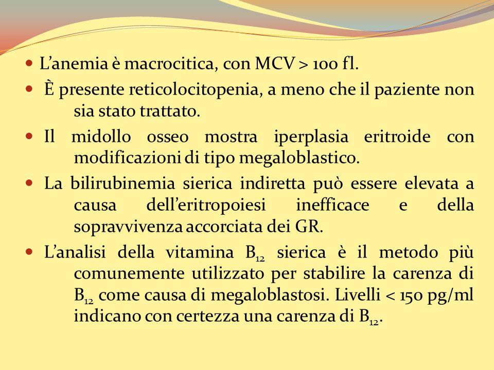 Lanemia è macrocitica, con MCV > 100 fl.