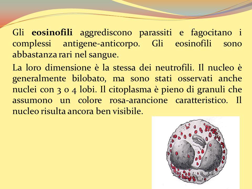 Gli eosinofili aggrediscono parassiti e fagocitano i complessi antigene-anticorpo.
