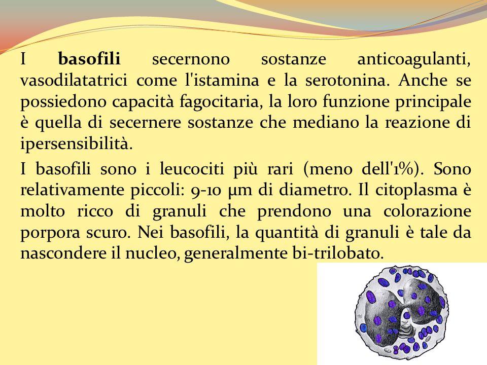 I basofili secernono sostanze anticoagulanti, vasodilatatrici come l istamina e la serotonina.