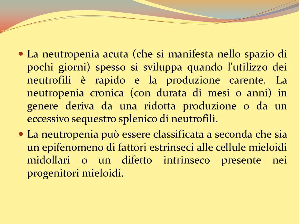 La neutropenia acuta (che si manifesta nello spazio di pochi giorni) spesso si sviluppa quando l utilizzo dei neutrofili è rapido e la produzione carente.